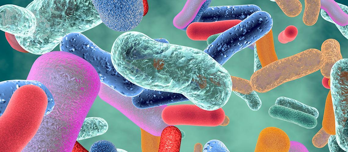 Un batterio contro la malaria