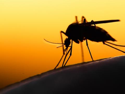 Sai perché….. le zanzare pungono solo alcune persone e non altre?