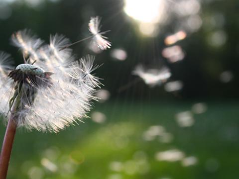 Sai perché i pollini provocano allergia?